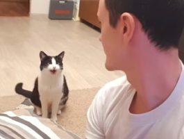 Hver eneste gang disse to får øyekontakt reagerer katten på en helt herlig måte
