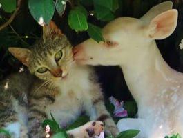 Albino-rådyret ble funnet forlatt og alene, men så ble den venn med denne katten