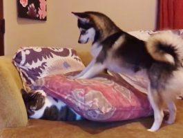 Hunden vil at katten skal stå opp. Da gjør hunden noe uvanlig