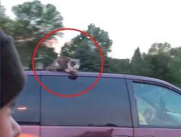 Sjokkert familie oppdaget en katt på taket av en bil som kjørte i over 90 km/t